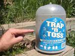 Trap 'N Toss, On Third Full of Flies - 06-13-2009
