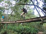 Bryan walks across a Rainforest bridge - Ecuador, January 2006
