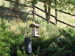 Our backyard bird feeder - May 31, 2006