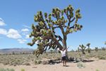 Roger Wendell and a Joshua Tree at Death Valley - 06-08-2011